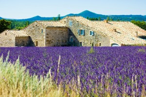tour in provence