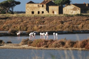 Tourism in Camargue