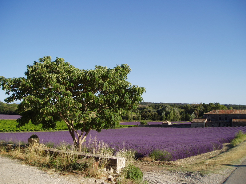 Sightseeing Provence